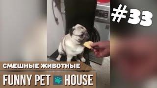 СМЕШНЫЕ ЖИВОТНЫЕ И ПИТОМЦЫ #33 ФЕВРАЛЬ 2019 [Funny Pet House] Смешные животные