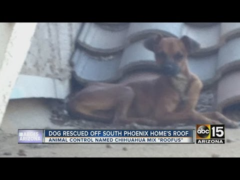 Dog Reportedly On Roof Of Phoenix House For Days Rescued