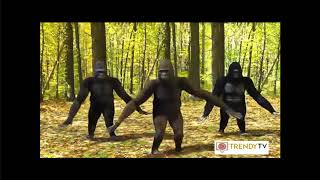 Dilara Oyun Havası Dinle.📀▶Ankara Oyun Havaları 2017 Dilara Gazel Düştü Bağlara. Maymunlar Koptu😁