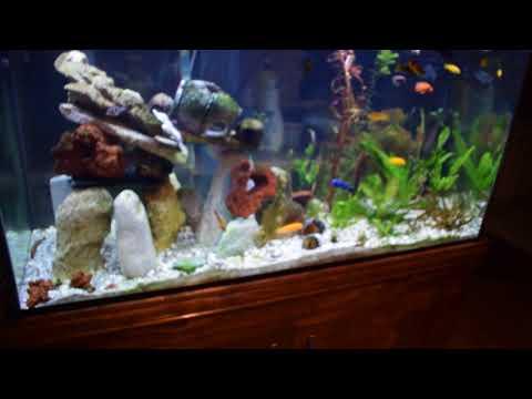 Aquaneat Planted Plus 24/7 Aquarium LED Light Review and Demo