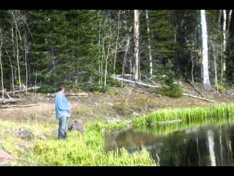 Dr. Greenfinger - Fishing Song