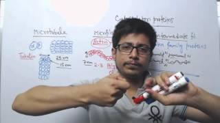 Microtubule Microfilament and Intermediate Filament