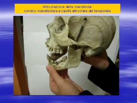 Clinica di Tver sulla sostituzione delle articolazioni