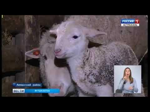 Управление Россельхознадзора проводит аттестацию предприятий по убою в Астраханской области с последующей возможностью экспорта продукции