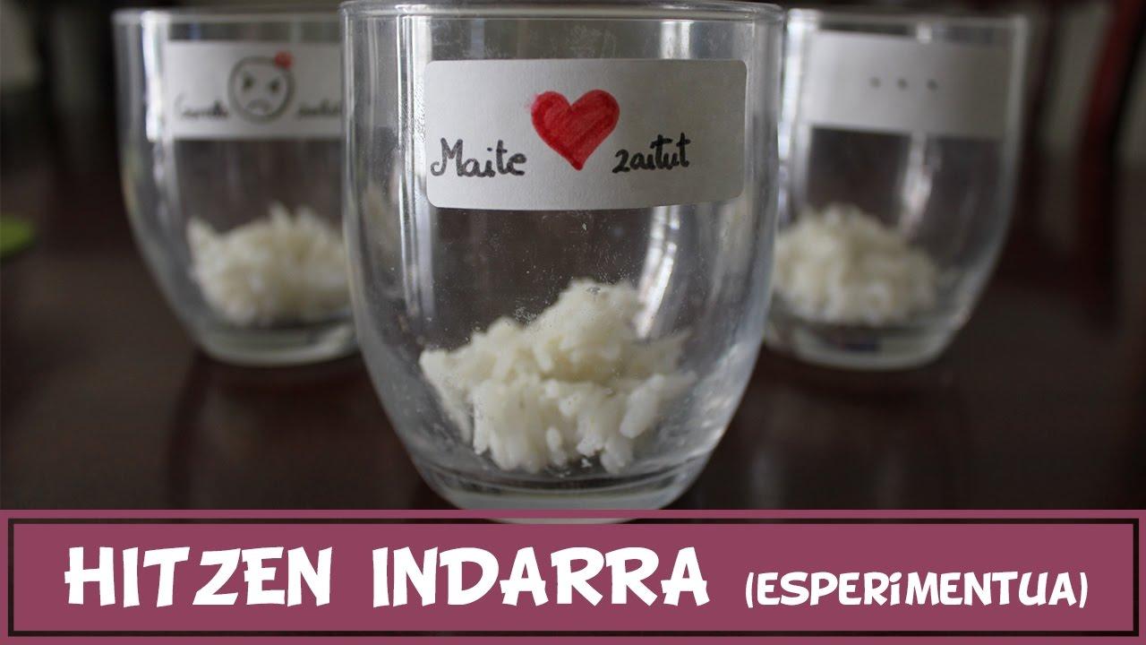Hitzen indarra (esperimentua) - Zer gertatuko da arrozari hitz itsusiak esan ezkero?