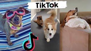 Awesome Dogs of TikTok ~ Cute & Funny Puppies TIK TOK 2020