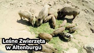 Śpimy na Odludziu + Park Leśnych Zwierząt w Altenburgu (Vlog #130)