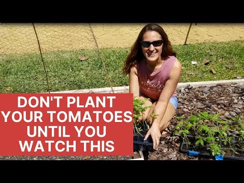 , title : 'How to Plant Tomatoes The Right Way | Florida Gardening 101