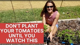 How to Plant Tomatoes The Right Way | Florida Gardening 101