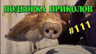 НОВЫЕ ПРИКОЛЫ #111 2019 СМЕШНОЕ ВИДЕО 7 минут смеха до слез Ржака Приколюха Подборка приколов УГАР