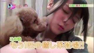°C-uteYajimaMaimi矢島舞美HouseAndPets:D