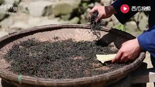 小伙手工制作茶叶,在竹林泡上一杯,这不就是城里人喜欢的生活吗