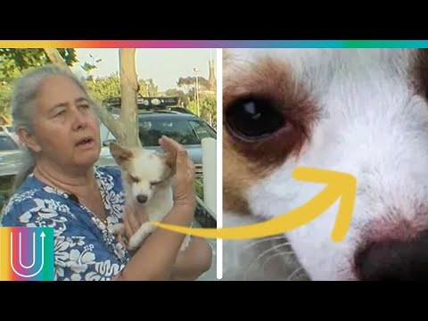 Buscaba a su perro desaparecido y terminó siendo humillada