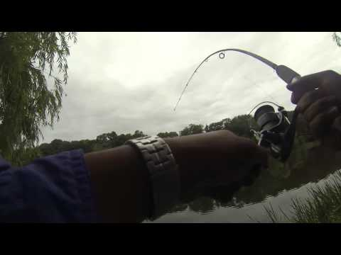 WTF? Grenadier Pond, High Park – Bass Fishing Part 2 – July 20th