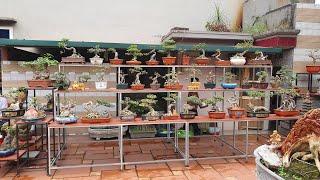 SH.3413.Dàn Bonsai mini vườn cảnh Nguyễn Kim Tuấn đẹp đến chừng nào.