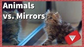 Animals vs Mirrors Compilation [Funny] (TOP 10 VIDEOS)