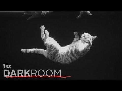 Proč kočky pokaždé dopadnou na všechny čtyři