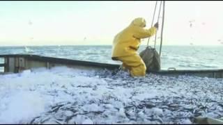 Как ловят хамсу в черном море