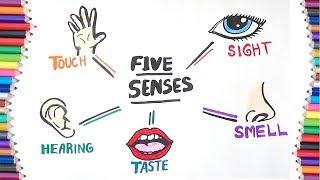 5 SENSES   HOW TO DRAW