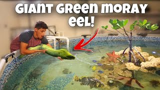 My NEW GIANT GREEN MORAY EEL For My SALTWATER POND!!