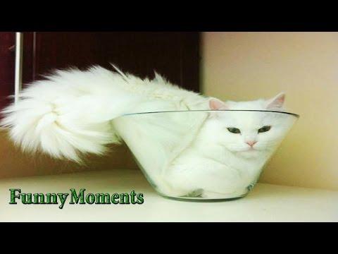 Por que gatos amam espaços confinados? É hilário!