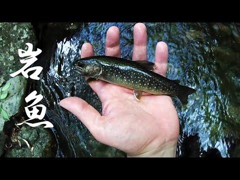 "[HD] IWANA Fly Fishing. ""Flyfisher's eyes. No.33"""