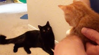 The First Time Cole and Marmalade Met
