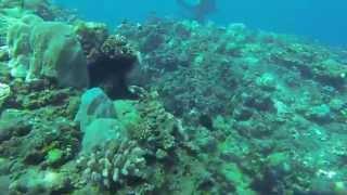 preview picture of video 'plongée reunion saint gilles les bains GOPRO HERO 3'