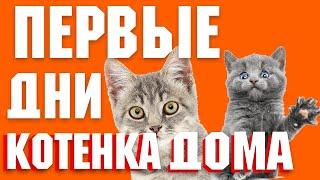 Первые дни котенка в квартире | Как сделать адаптацию легче? | Почему котенок боится?