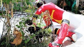 Trò Chơi Bé Vui Mèo Con Nhí Nhố ❤ ChiChi ToysReview TV ❤ Đồ Chơi Trẻ Em Baby Fun Kids Song