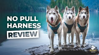Dog Harness Review | HUSKY APPROVED