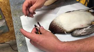 How to package your bird for the freezer, the BZT way!  Easy to follow video!