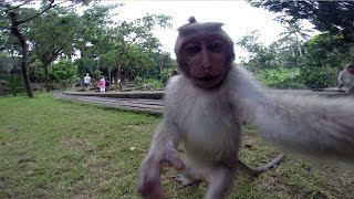 Cheeky Monkey Takes Selfie With Tourist