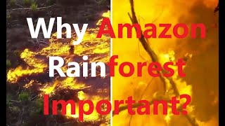 Why is the Amazon Rainforest important?  Amazon rainforest on fire : 'Lungs of the world' in flames