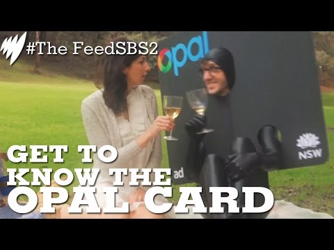Falling In Love With Sydney's Opal Card Is Like Dating A Police Informant