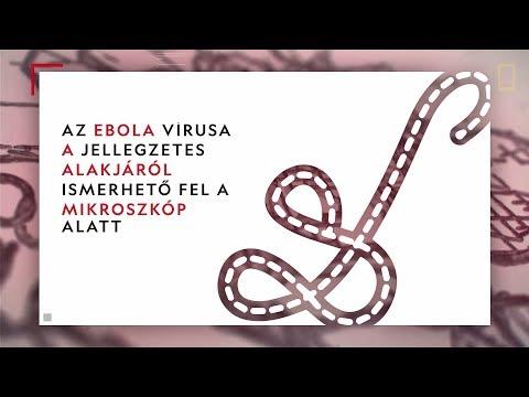 aschelminthes szórakoztató tények)