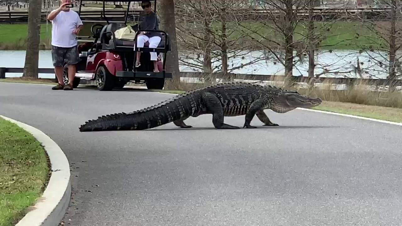 По улице ходила большая крокодила