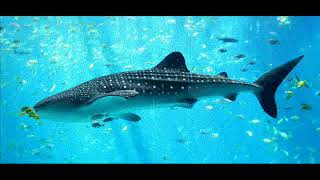 Video Miramare: Velká ryba/ The big fish (part 3)