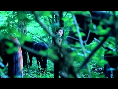 Merlin 4.04 (Preview)