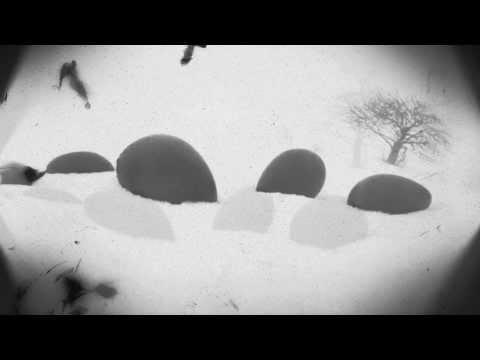Ptáci - Sbírka motivů / Motive Collection