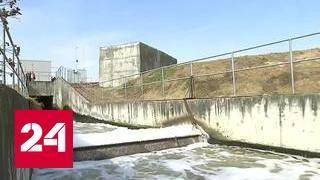 За чистоту московских вод ответят осетры