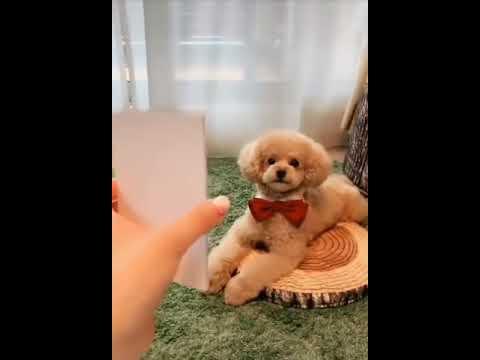 Σκύλος ποζάρει σαν επαγγελματίας μοντέλο!