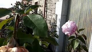 Video del alojamiento Las Virtudes I, II y III