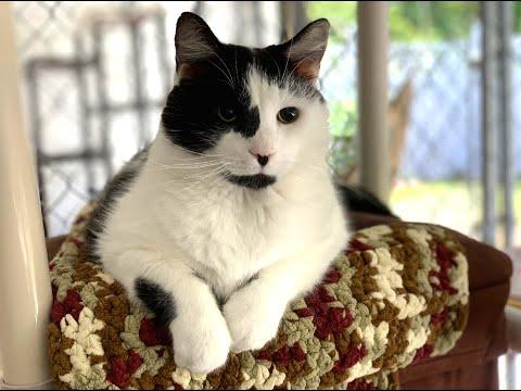 Blind Cat Rescue & Sanctuary, Inc.