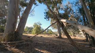 Tree runs - FPV