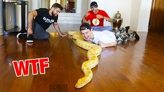 MASSIVE SNAKE IN THE FAZE HOUSE!!