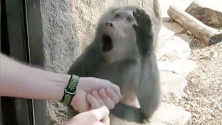 Monkeys Reaction to Magic 🤩- Funny Monkey Videos [Funny Pets]