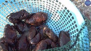 Xem Anh Thợ Lặn Bán đồ Sau Một Ngày Lặn Mò Dưới đáy Biểnsea Food In Vietnam
