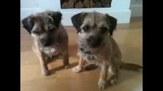 Amazing Dog Tricks Performed By Hazel And Bramble