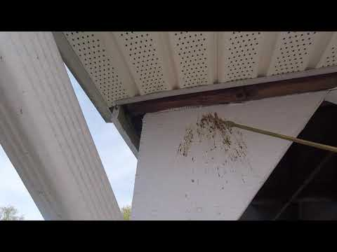 """It's early spring and pests are waking up and getting ready to find a new location to nest! Recently, I went on a service call for a commercial client, an apartment complex in Bridgewater Township, NJ. One of the residents was throwing away some garbage and when he entered the dumpster corral, a kamikaze bee dive bombed right at him! Needless to say, this scared the daylights out of the resident and he reported his findings to the property owner, who then called Cowleys to resolve this bee nightmare. Since the resident was attacked near the dumpster corral, that is where I began my inspection. Immediately, I was greeted by a not-so-friendly bee who was trying to intimidate me by diving right at my head. After over a decade in the pest service industry, it'll take more than a small bee to scare me off. As I continued my inspection I noticed that there was an area of the wood trim that was stained. Upon inspection, I determined that the """"stain"""" was actually droppings from carpenter bees. Carpenter bees are similar in appearance to bumble bees, but their abdomen doesn't have any hair and is shiny black in color. While they can be aggressive, they very rarely will sting. Early spring, when the weather turns warmer, they emerge and begin looking for a place to build a gallery to lay eggs. Usually, their preferred habitat is either a piece of wood trim or deck railing. They will bore into wood and then continue boring, causing a considerable amount of structural damage. They will lay eggs in these galleries, which can be over 10-28 inches long! Once a carpenter bee makes a gallery, they will continue to use the same gallery year after year.  The most effective treatment method is to inject the galleries with a direct-contact dust residual. This residual directly targets the carpenter bees and will eliminate any returning bees as well as any newly-hatched carpenter bees leaving the gallery. I will schedule a follow-up inspection with the property manager to make sure that """
